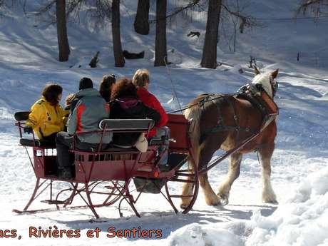 Promenade en traîneau à cheval