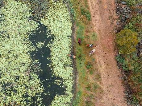 Randonnée équestre à la demi-journée à la station d'élevage - Far West Ranch
