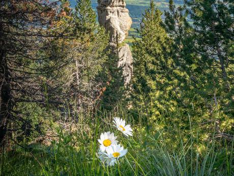 Vers un petit sommet - Randos Champsaur