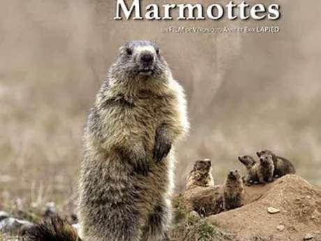 Projection Le Clan des Marmottes