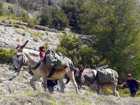 Rando accompagnée avec les ânes