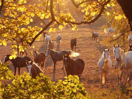 Les Chevaux du Verdon : Randonnées Equestres