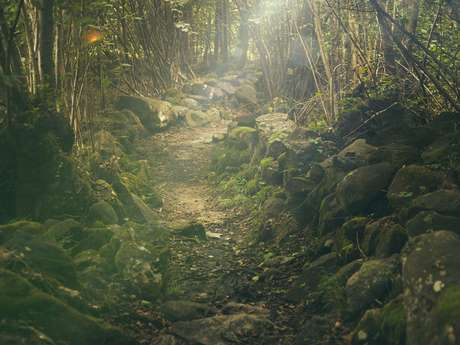 Anniversaire nature : Balade nature & légendes