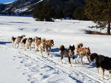 Balade assise en chiens de traineaux - La Tribu Rando de Seb