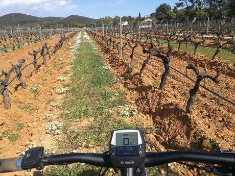 Balade à VTT électrique dans le vignoble de Figuière