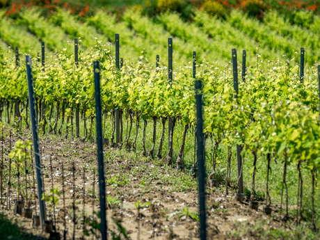 Découverte des arômes du vin au Château Saint Pons