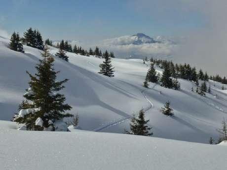 Wild raquette (snowshoeing)