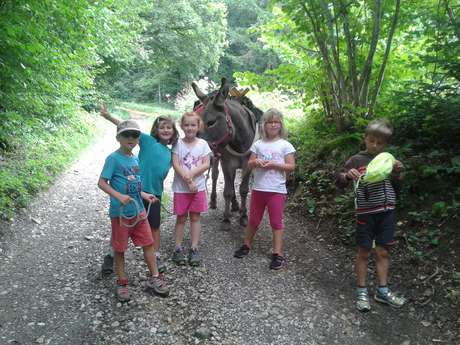 Birthday - Walk with a donkey