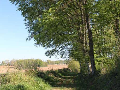 En passant près du grand chêne