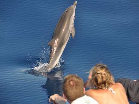 Cala Rossa Dream - Nage avec les dauphins