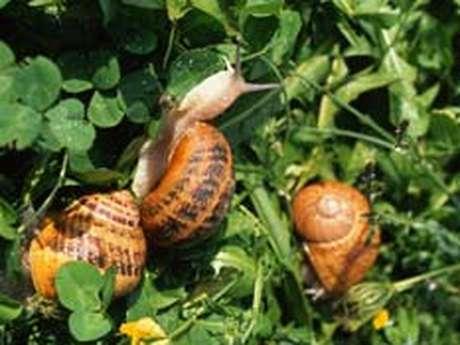 Élevage Des Escargots à gogo