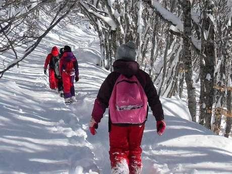 Balade en raquettes découverte - Accompagnateurs en montagne du Champsaur
