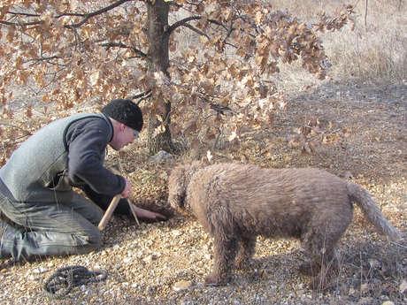 Connaitre et cuisiner la truffe