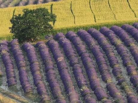 Aroma'Plantes Distillery