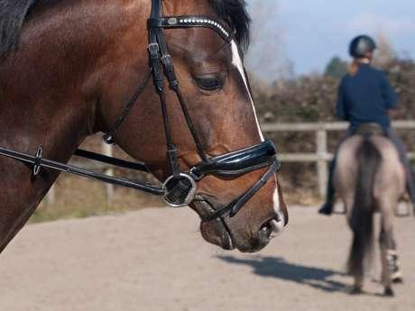 Equitation - enfants débrouillards