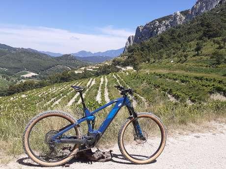 Accompanied bike ride and tasting at Gigondas LaCave