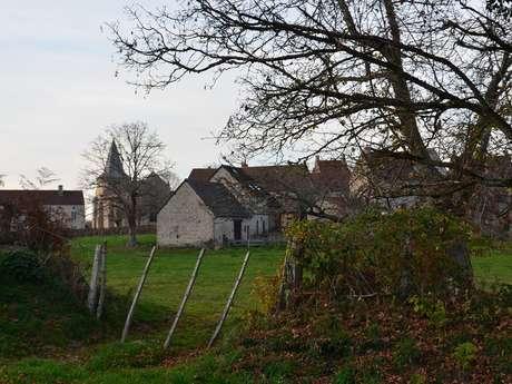 Circuit Pédestre N°32 Ars - Villeloube