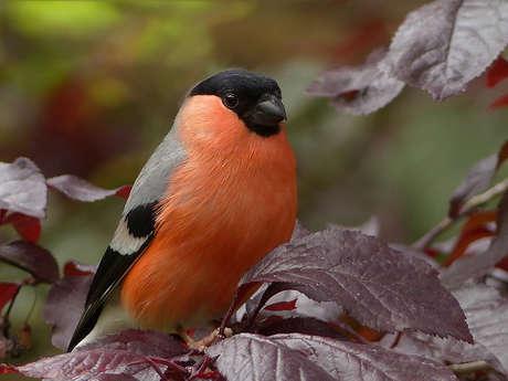 Sortie nature : initiation aux chants des oiseaux - ANNULE