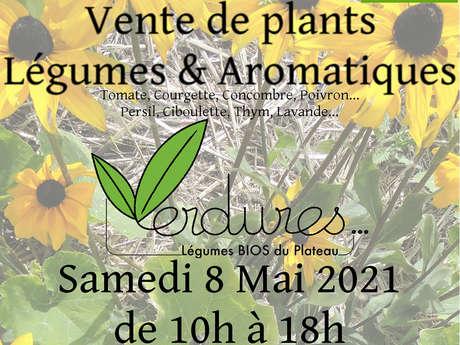 Vente de plants de légumes et d'aromatiques bio