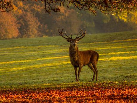 Sortie nature : brame du cerf