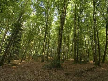 Chabrières Forest