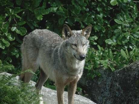 'Les Loups de Chabrières' wolf park