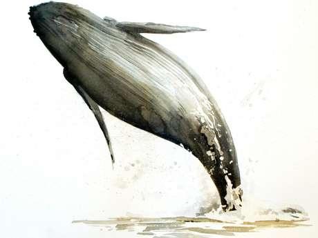 Pourquoi le saut des baleines ? D'après l'œuvre de Nicolas Cavaillès