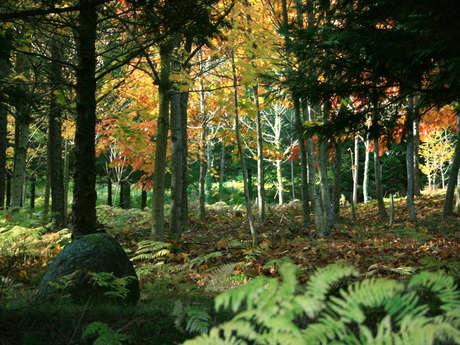Arboretum de la Fôt