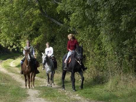 Menton Elisabeth Horse Farm