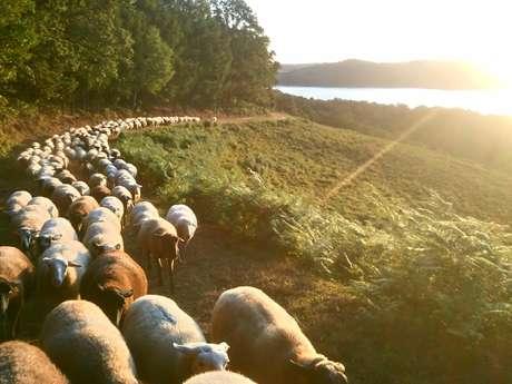 Randonnée pastorale sur l'estive de la Mazure