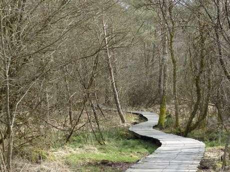 Randonnée - Promenons nous sur le sentier de l'étang