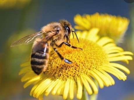 Atelier de l'été : les abeilles