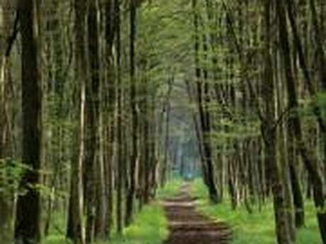 La Forêt domaniale de Moulière