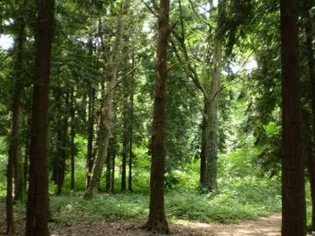 La Forêt domaniale de Châtellerault