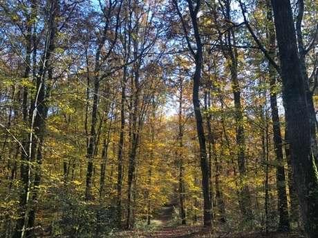 Bain de forêt - Activité bien-être