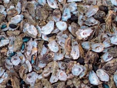 Grand Châtellerault valorise vos coquilles d'huîtres en déchèteries pendant les fêtes !
