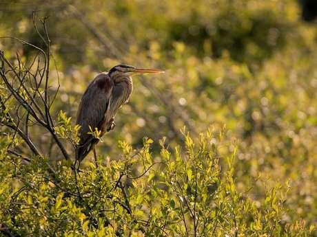 Découverte de la Réserve Naturelle et observation des oiseaux