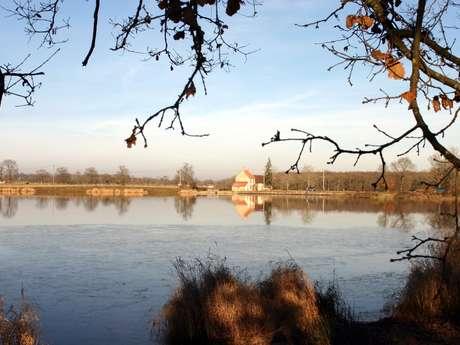 Circuit Pédestre N°45 L'étang des Landes