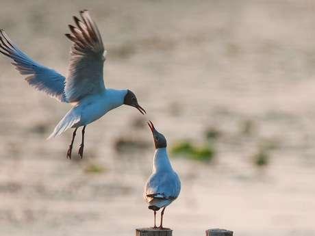 Observation des oiseaux avec la LPO Montluçon