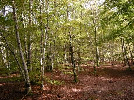 La Forêt de Drouille