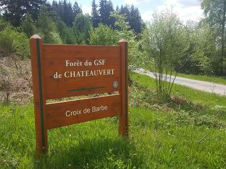 Forêt de Châteauvert