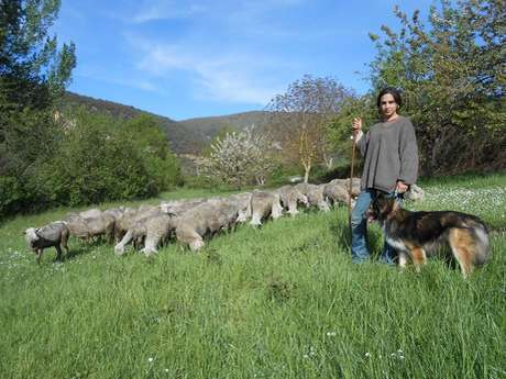 Visite de la ferme de Pinet, élevage de brebis laitières