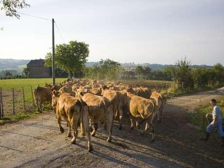 Visite de ferme du veau de l'Aveyron et du Ségala