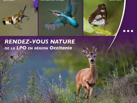 Observation des vautours avec la LPO