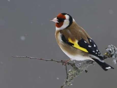 RDV national pour le comptage des oiseaux