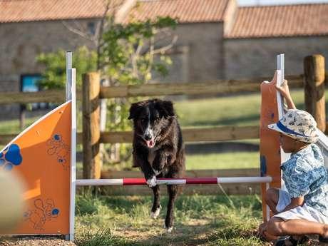 Parcours agilité canine