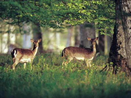 CHASSE RIVIERE-LES-FOSSES