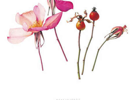 """Exposition """"Lace"""""""