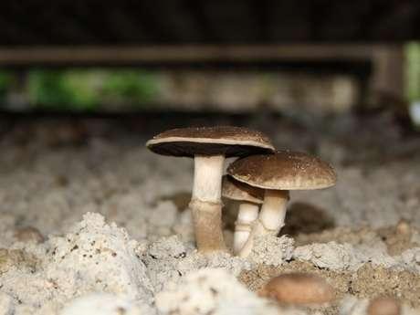 Visite de la champignonnière de Noue