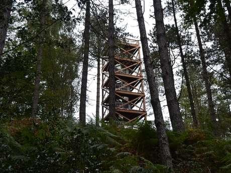 Balade de 14 à 18 en forêt de Retz